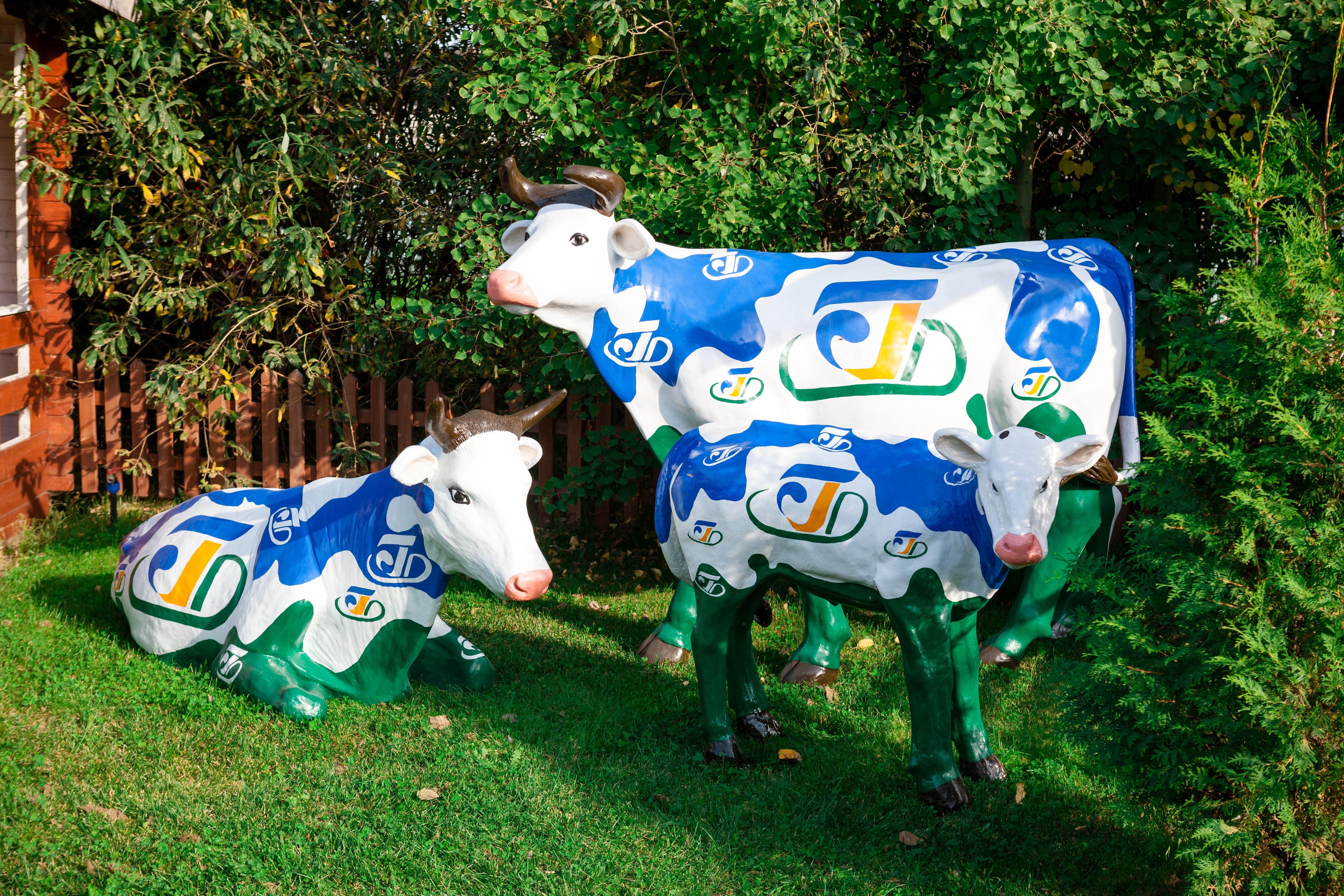 Рекламный макет Коровы