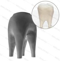 фигура зуб для рекламы стоматологии